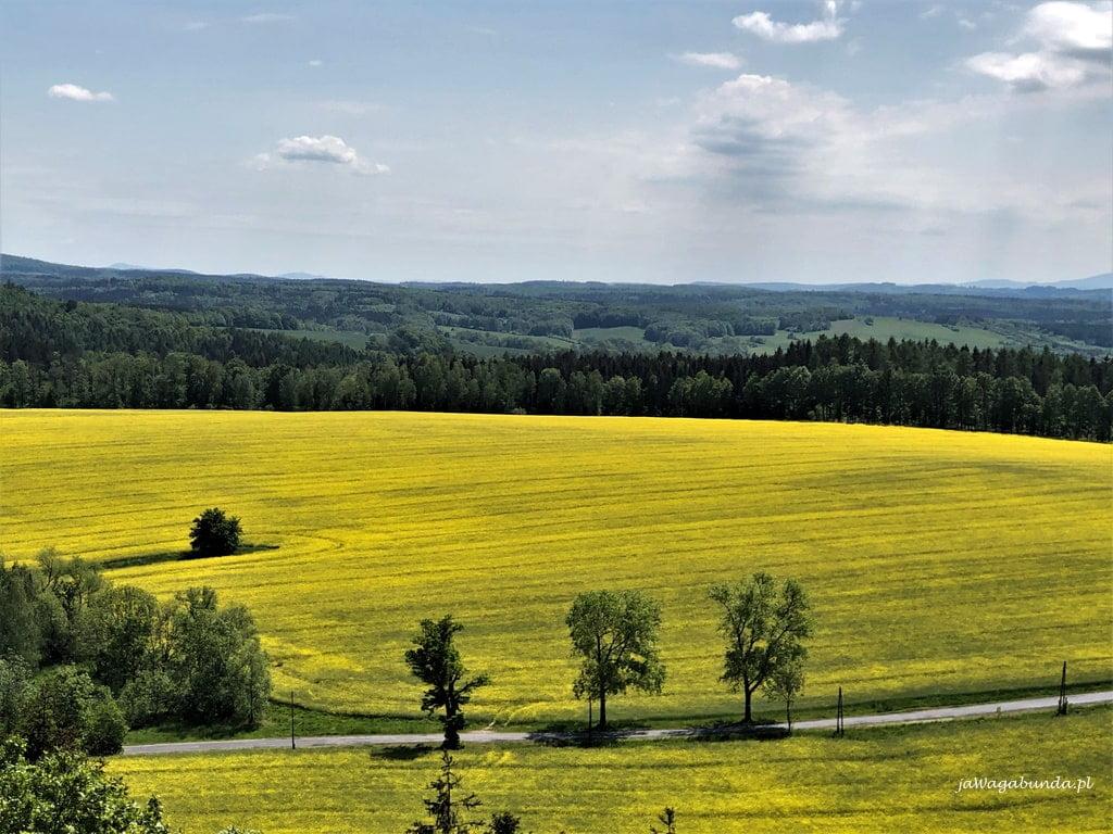 widok na pola rzepaku i góry z więzy w Górach Kaczawskich