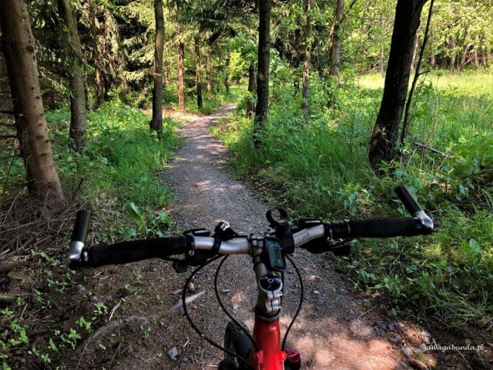 rowerem po ścieżce w lesie