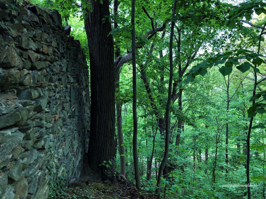 Wzgórze z zamkiem w Wojcieszowie - widoczny mur i drzewa wokół niego