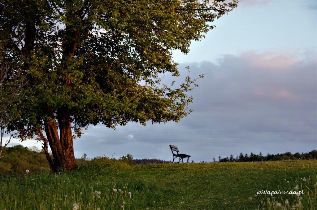 drzewo i ławeczka pod nim w górach kaczawskich