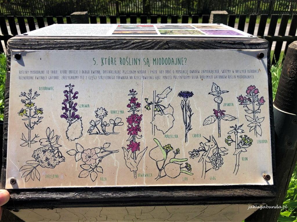 tablica informacyjna o roślinach miododajnych umieszczona w sudeckiej zagrodzie edukacyjnej