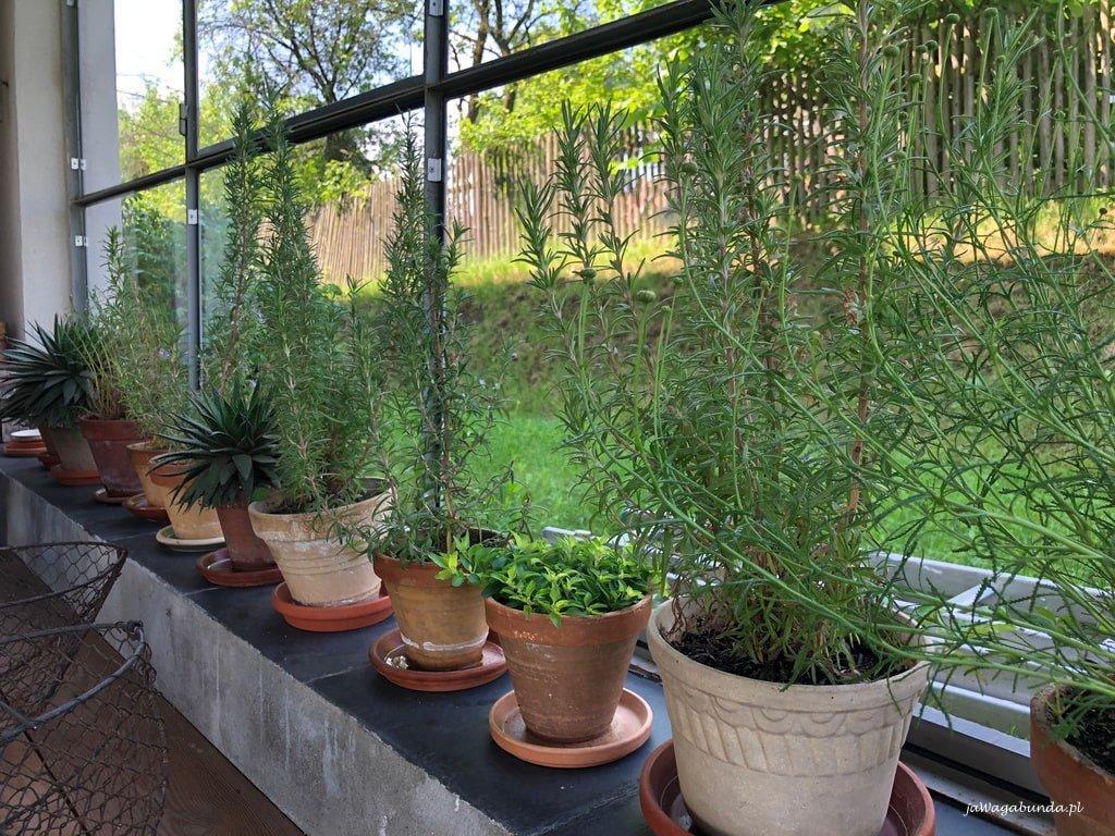 zioła w donicach na parepecie