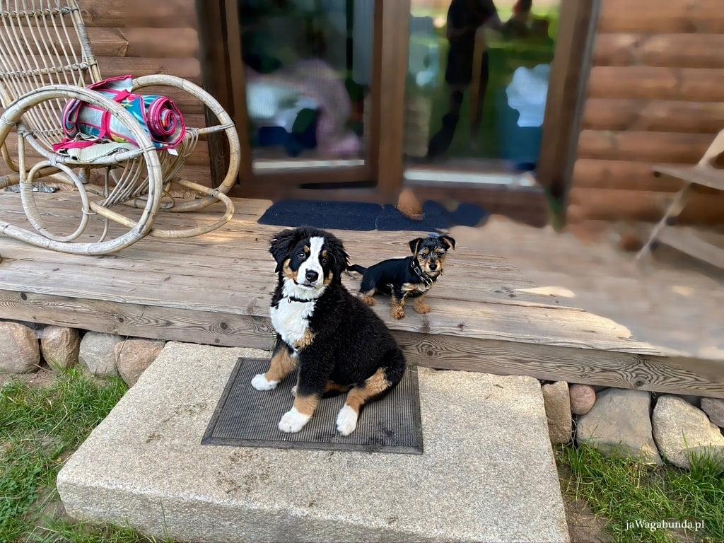 pies przed drewnianym domkiem, w tle bujany fotel