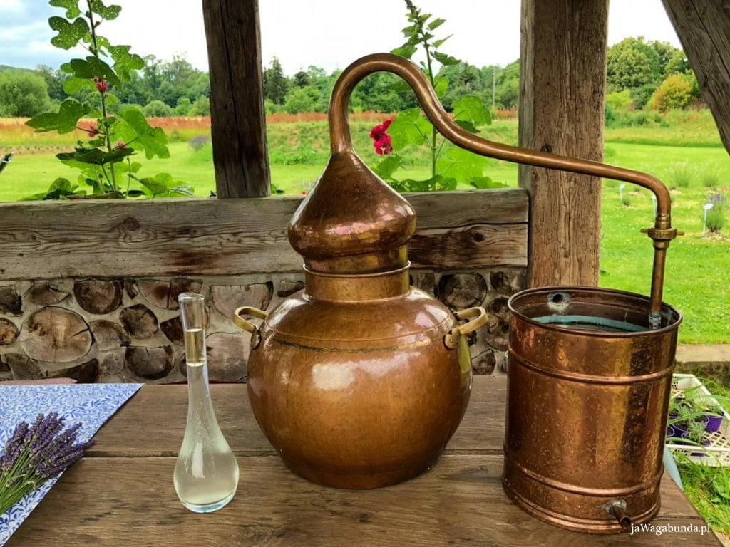 destylacja olejków z lawendy i melisy w Chacie Morgana