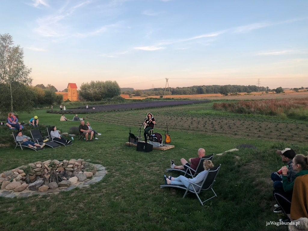 ludzie siedzą przy ognisko, w tle pole lawendy, muzyk gra na gitarze