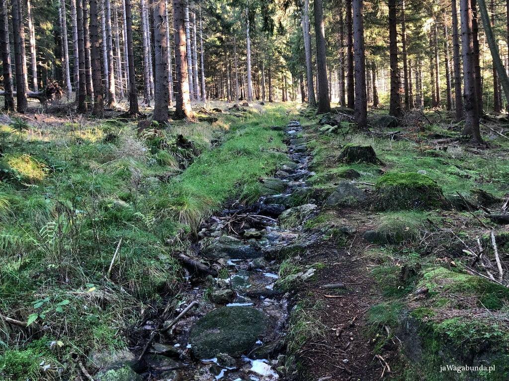 błotnista ścieżka w górach, po której płynie strumyk