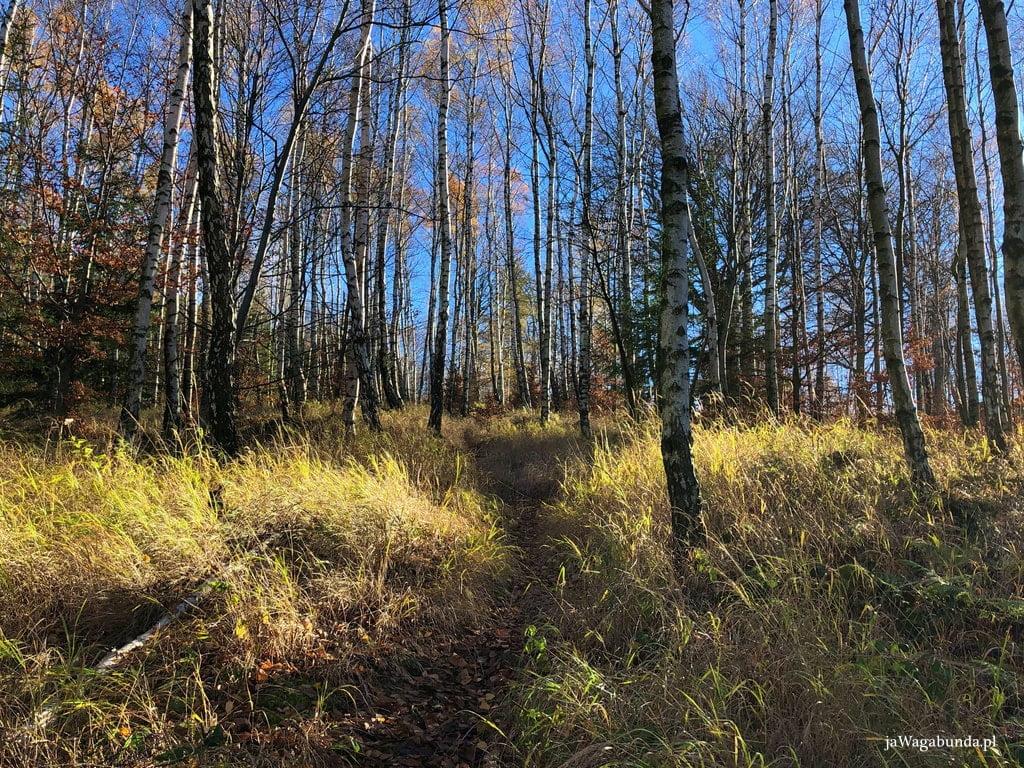 wysokie trawy, a wśród nich wytyczona ścieżka na Jelenie Skały