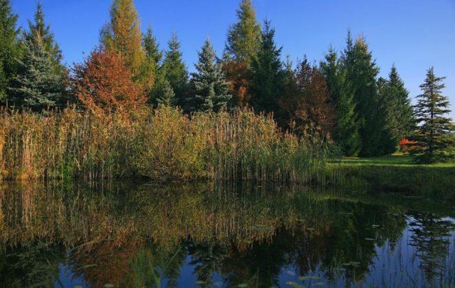 jezioro wokół las