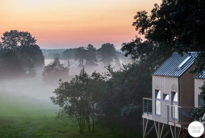domek na drzewie, las i ścielące się mgły
