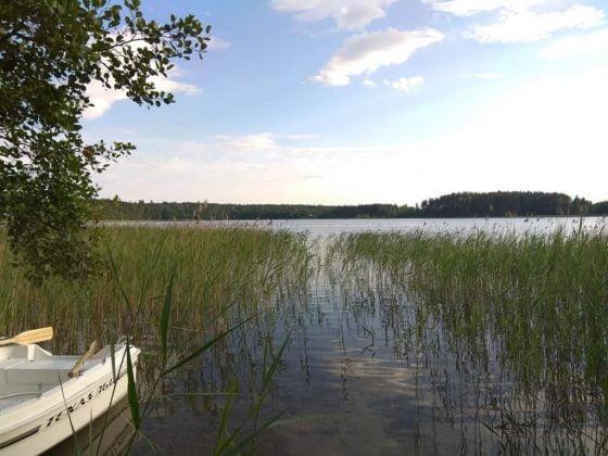 jezioro z brzegu porośnięte szuwarami