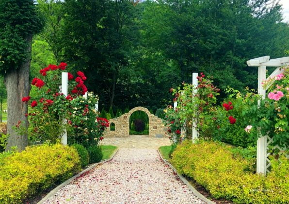 ogród różany, a na końcu mur