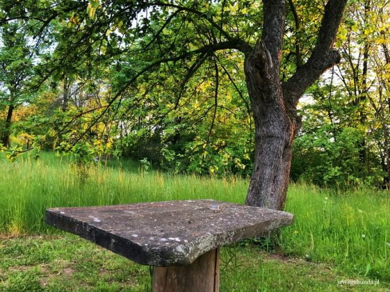 kamienny stół stoi na łące, obok drzewo