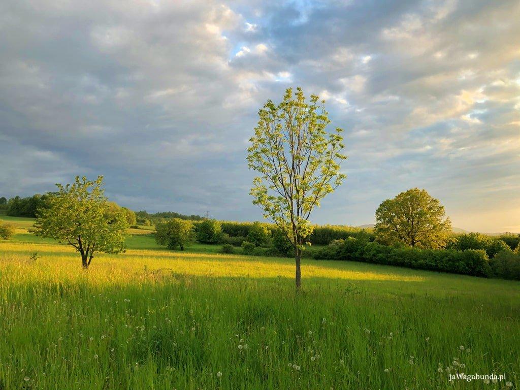 łąka i drzewa na jej obrzeżach oświetlone wszystko przez słońce