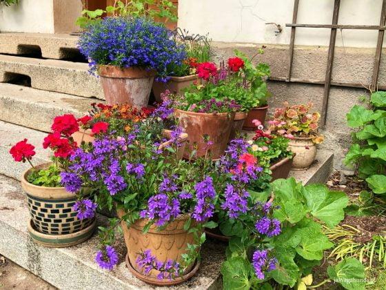 kolorowe, letnie kwiaty w donicach stoją na schodach