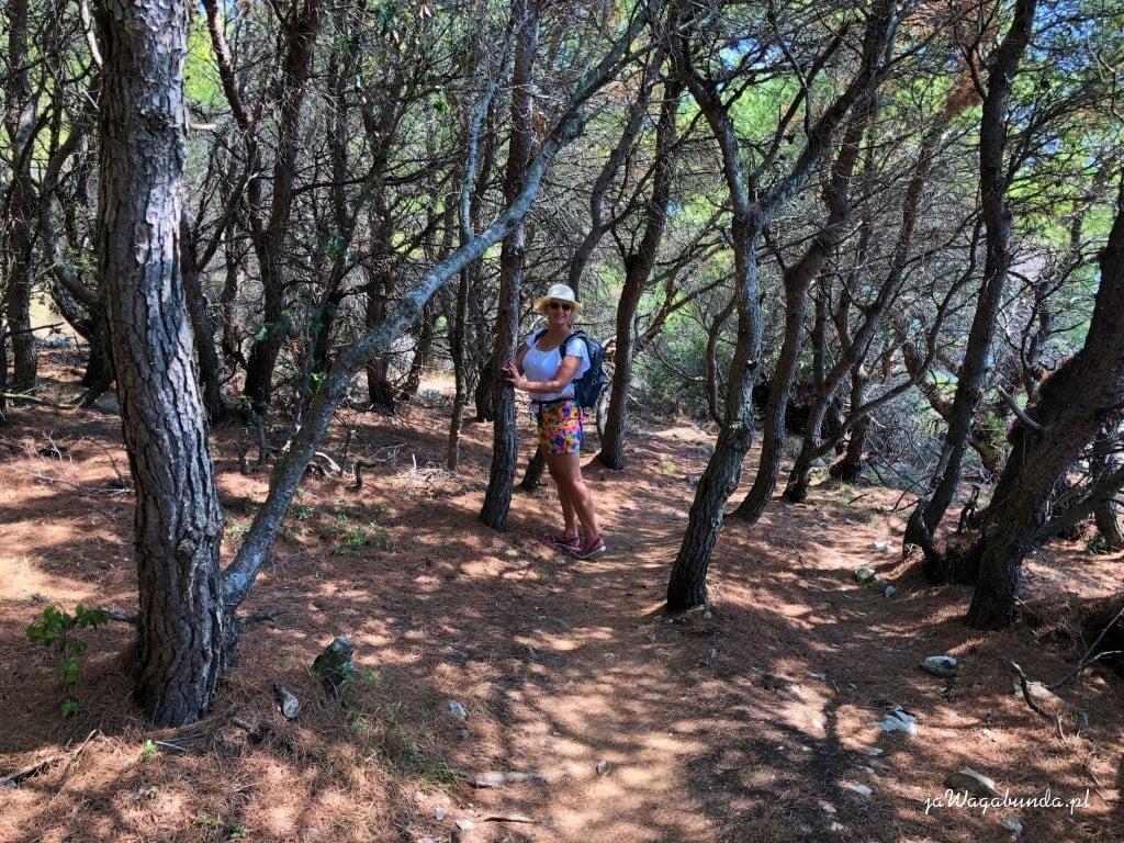 droga przez las, którą idzie kobieta