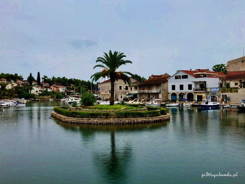 wyspa z palmą w środku miasta