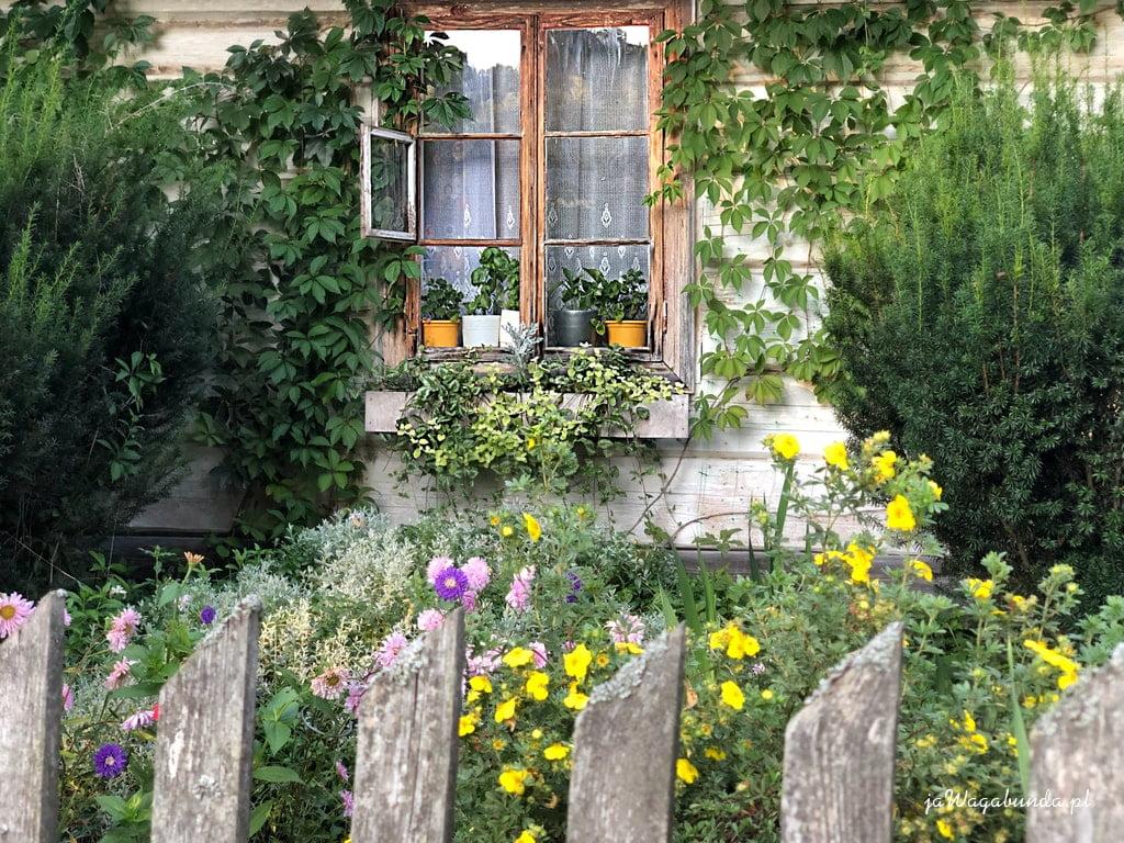 dom drewniany, drewniany pło, mnóstwo polnych kwiatów