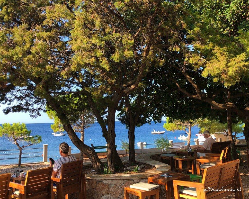 kawiarenka pod drzewem tuż nad morzem