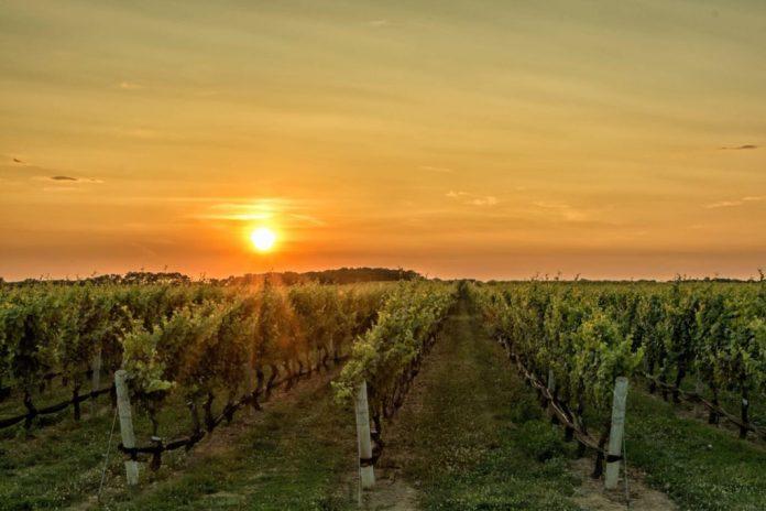 winnica i zachód słońca