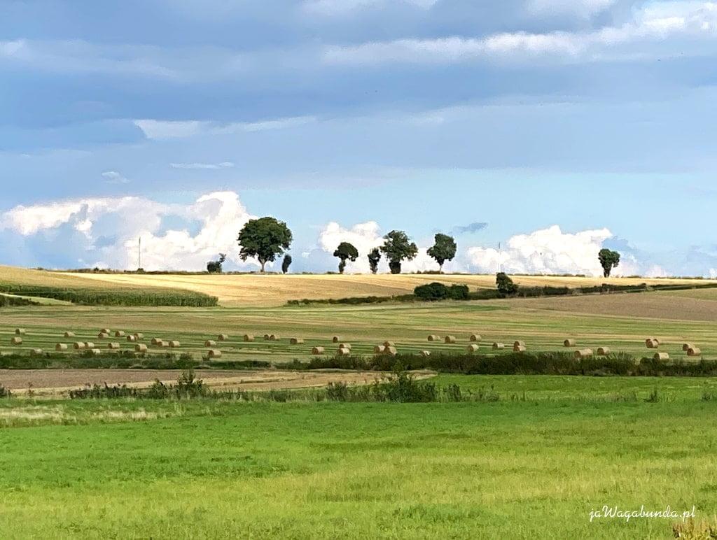 krajobraz pola z drzewami w tle